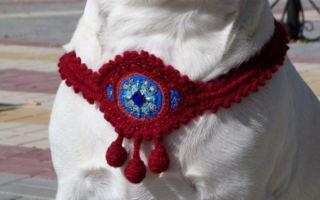 Талисман для собаки: мастер-класс