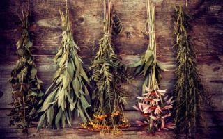 Растения-обереги