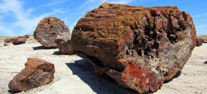 Окаменелое дерево – описание и свойства