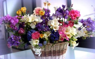 Цветок-талисман по дате рождения