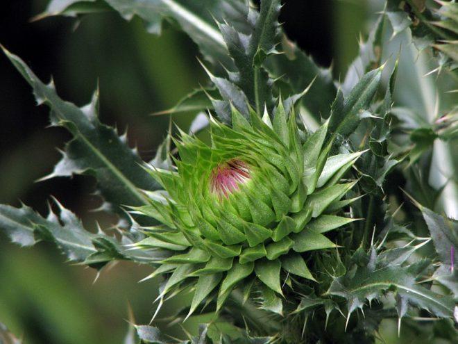 Колючие растения